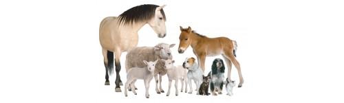 Zdrowie zwierząt